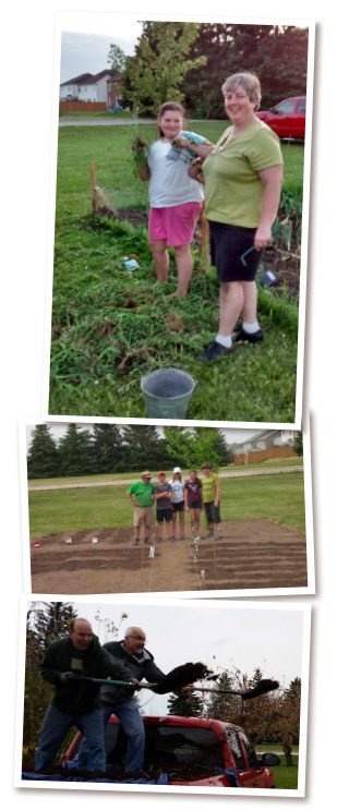Members of the Breslau Mennonite Church get the gardening plots ready with manure, weeding and spacing last spring. This year, the garden opened 12 plots to the public, with spaces filling up in just a couple of days.[Submitted]
