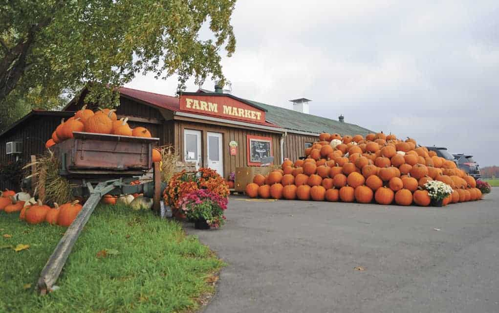Whether for decorative jack-o-lanterns or tasty treats such as pies, pumpkins are front and center