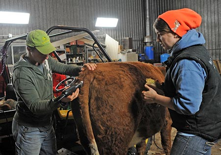 Micah Playford  of Elmira puts on the finishing touches on Tootsie. [Photos by Whitney Neilson, The Observer]