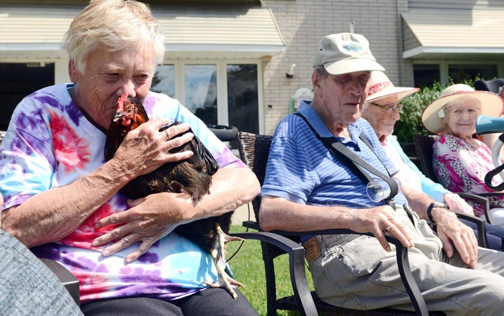 Pat Maxine holding one of the four hens Chartwell Elmira Retirement Residence is taking care of as part of the program 'Rent The Chicken', which allows for the small-scale care of laying hens. [Ali Wilson / The Observer]