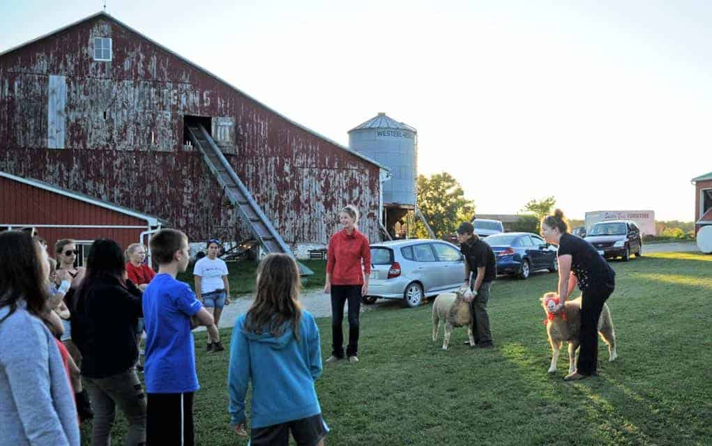 Waterloo 4-H Sheep Clubmembers get a few pointers in looking after and presenting their animals