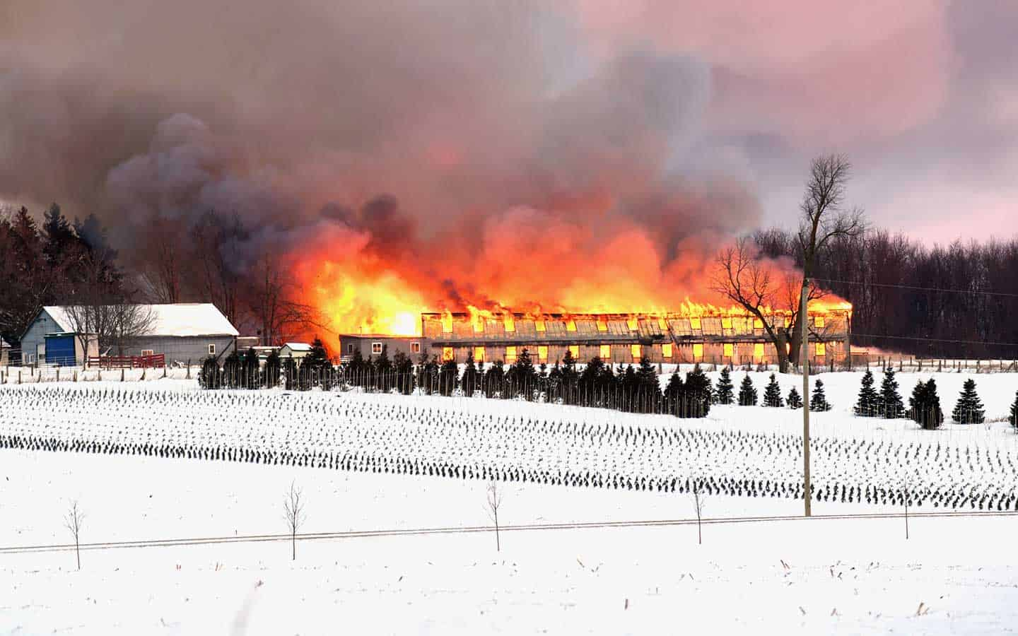 Chicken Barn Destroyed By Fire Thursday Morning Observer