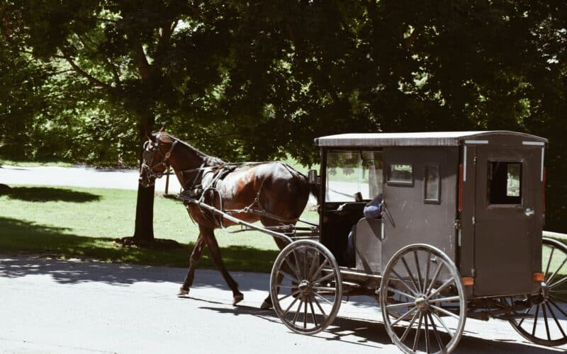 Amish horse and buggy 💲